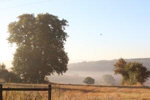 Vue depuis notre jardin, à l'heure où blanchit la campagne !