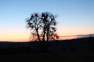 Le bonheur dès l'aube