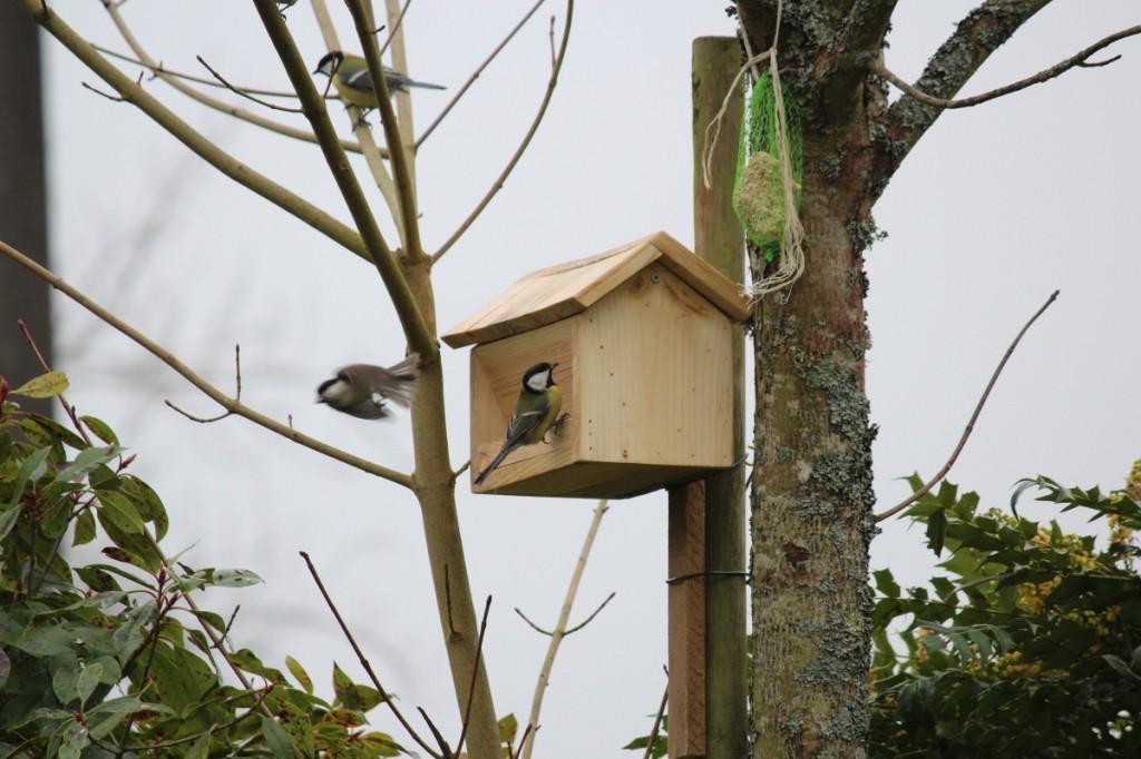 La danse des oiseaux (ici des mésanges) venant dépouiller notre mangeoire en hiver !