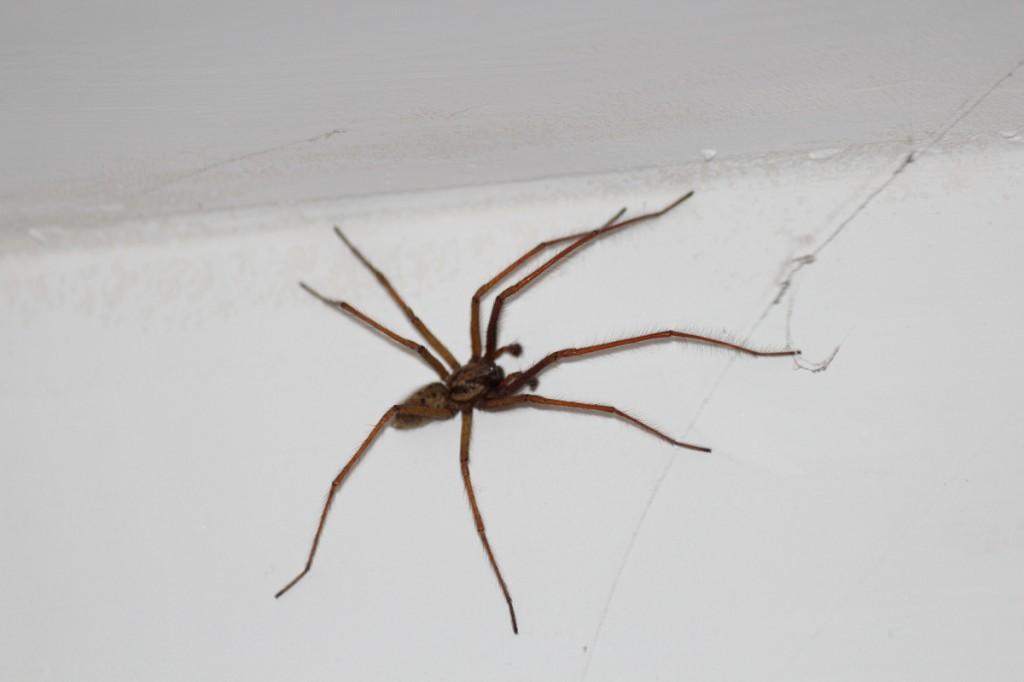 Des grosses, des petites, des qui font ch... à tisser leurs toiles partout, les araignées pullulent à la campagne !