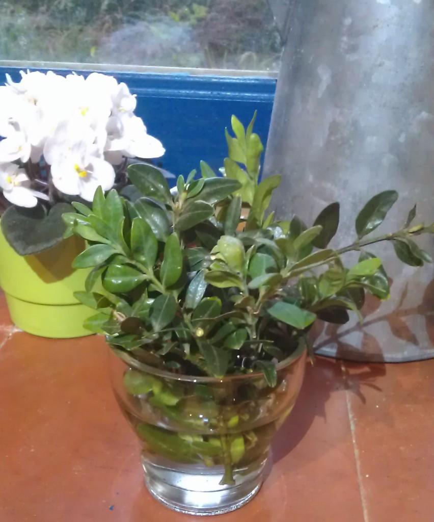 Heureusement il leur arrive d'être adorables et de m'offrir des bouquets cueillis dans la cour :)