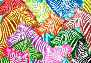 zebra-1904246_960_720